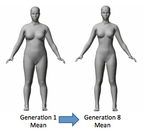 In eight generations, the average body became more slender. Waist, seat, collar, bust, underbust, forearm, bicep, calf and thigh girth all decreased by more than one standard deviation. At the same time, leg length (inseam) rose by 1.4 standard deviations. Rob Brooks